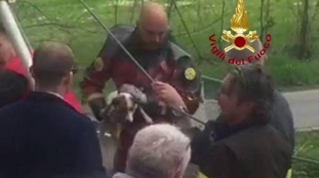 Il cane è stato salvato dai vigili del fuoco