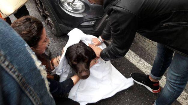 Cane cade nel fosso: salvato da un uomo, Giuseppe Melis,  che si è buttato