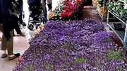 Il Lugo Garden Festival si svolgerà sabato 21 e domenica 22 (Scardovi)