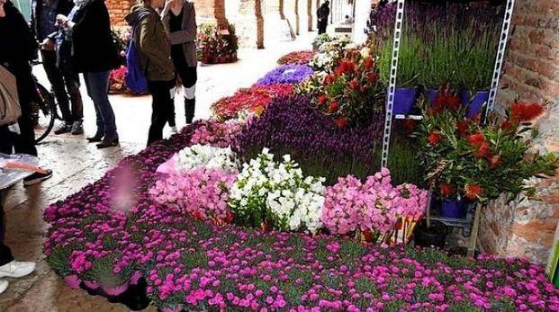 Il Lugo Garden Festival giunge alla sua terza edizione (Scardovi)