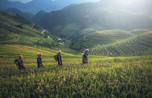 Bali agricoltura