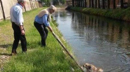 PAURA Uno dei tentativi di salvataggio del cane A destra l'ex sindaco di Soncino Francesco Pedretti