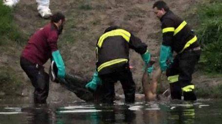 Il ritrovamento del corpo del 28enne De Jesus Wellington Dominguez dentro al fiume a Battifollo