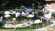 Zoo di Falconara (Ancona)