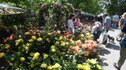 Bologna, Giardini e Terrazzi 2018 ai giardini Margherita (foto Schicchi)