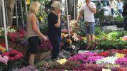 Fiori e piante per rendere belli e colorati i nostri spazi verdi (foto Schicchi)
