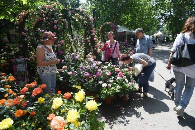 Per gli amanti delle rose 'Di rosa in rosa' per promuovere la conoscenza e la diffusione delle rose bolognesi (foto Schicchi)