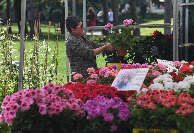 Nel Parco dei Giardini Margherita di Bologna la diciottesima edizione di Giardini&Terrazzi (foto Schicchi)