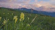 Un fiabesco tramonto fra le orchidee e le fioriture dei Piani di Ragnolo, in mezzo ai Sibillini
