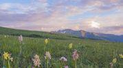 Fioriscono le orchidee sui Monti Sibillini