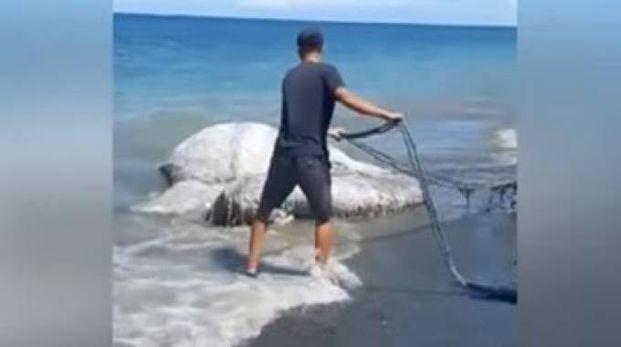 Un misterioso mostro marino nelle Filippine (youtube)