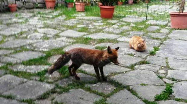 Il gatto e la volpe di Piazza al Serchio fotografati insieme