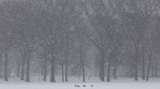 Previsioni meteo, torna la neve. Fiocchi bianchi in un'immagine d'archivio (foto Ansa)