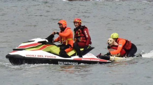 I cani della Sics all'opera (Foto Novi)