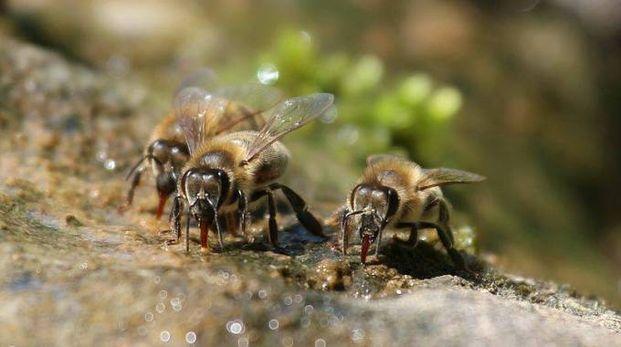 Fa troppo freddo e le api non escono dall'alveare