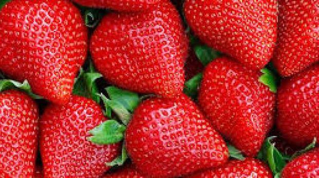 Strawberry Day a  Bagnacavallo