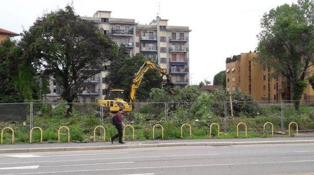 Le immagini degli alberi tagliati inviate dai lettori