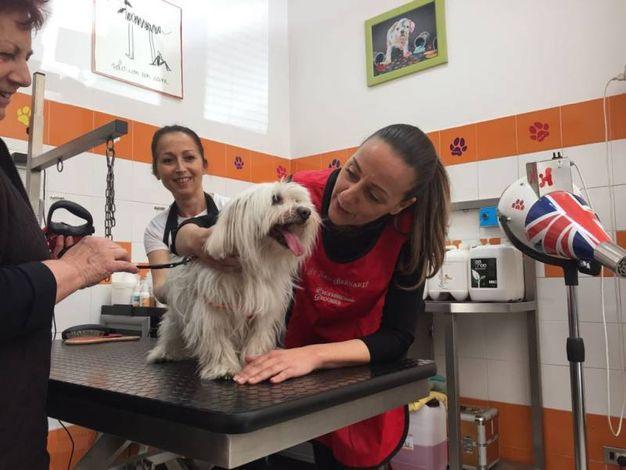 L'assessore Funaro alle prese con la toilette per cani