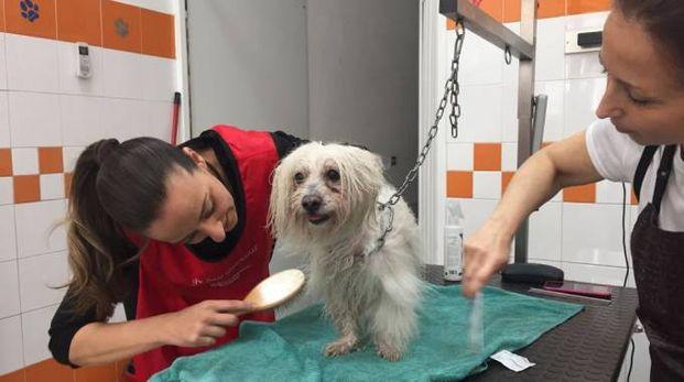 L'assessore Sara Funaro alle prese con la toilette per cani