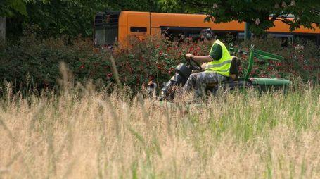 Gli interventi di manutenzione delle aree verdi