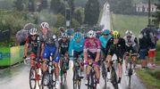 Il gruppone arriva a Imola (foto Isolapress)