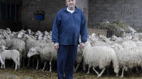 Un allevatore in una foto d'archivio. I lupi sono un pericolo per le pecore al pascolo