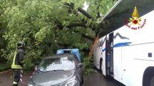 Albero crollato su bus turistico
