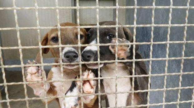 Alcuni dei cani in cerca di adozione (Foto Attalmi)