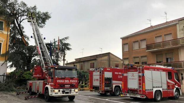 Un quarto d'ora di maltempo e sul municipio di Trecenta è caduto un pino