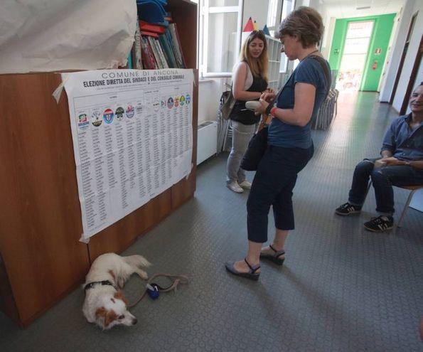 Anche i cagnolini ai seggi (foto Antic)