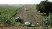 L'incidente agricolo dove è morto Irmerio Savelli (foto Corelli)