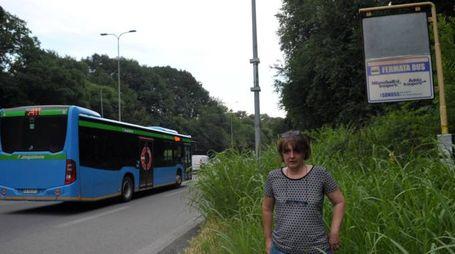 Fermate degli autobus sommerse dalla vegetazione