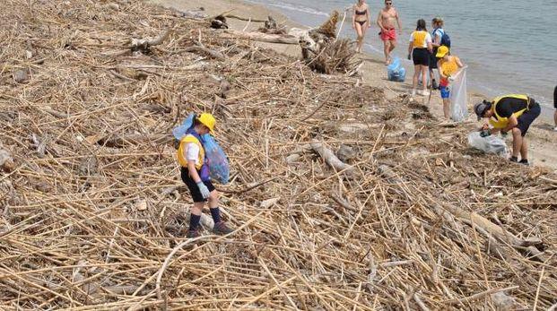 Pulizia della spiaggia alla Sentina