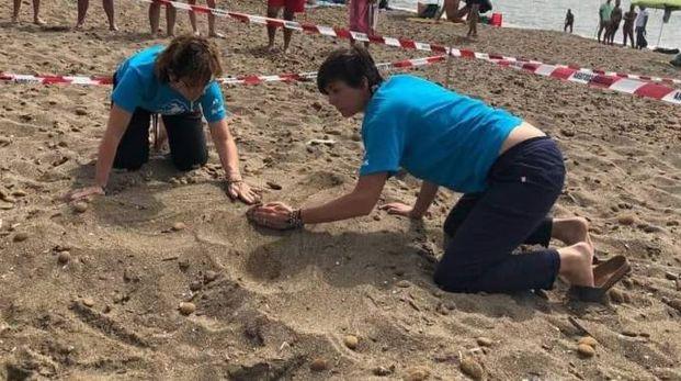 San Vincenzo, il nido di tartaruga caretta caretta viene protetto