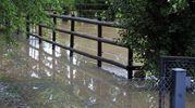 Sott'acqua anche un recinto per animali a San Savino (Scardovi)