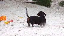 Lido Adriano, multata coppia con cane in spiaggia