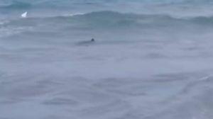 Lo squalo avvistato a San Foca (Youtube)