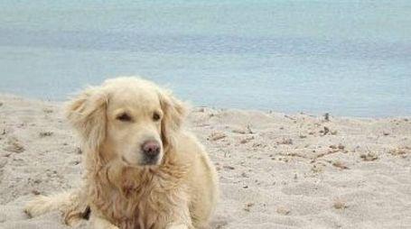 Chi porta il cane nelle spiagge non autorizzate rischia una multa di 200 euro