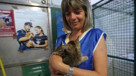 Una volontaria dell'Enepa di Faenza con alcuni gattini (foto d'archivio)