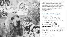 Il paggetto Whisky alle nozze di Filippa Lagerback e Daniele Bossari (foto Instagram)