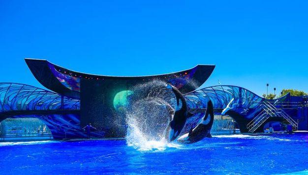 Seaworld - Orlando