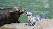 Tenerissimi baci tra animali