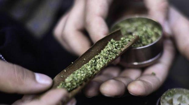 Marijuana (Ansa)