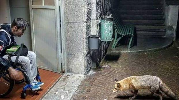 Luca Chiarini e la volpe che gli fa visita per qualche boccone