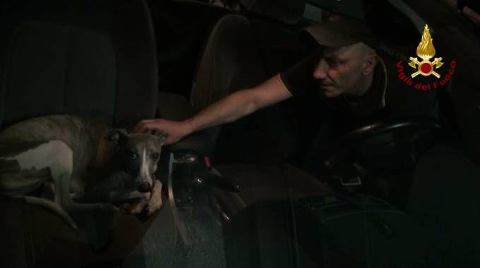 I vigili del fuoco sono intervenuti per salvare i due cani