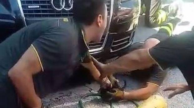 Il salvataggio del gattino in un fermo immagine del video