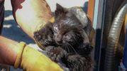 Il gattino salvato  (Fotoprint)