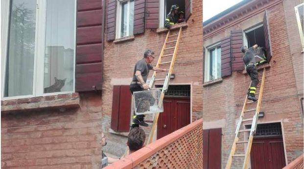 A sinistra, la gatta rimasta chiusa nell'appartamento. Nella altre due foto l'intervento dei vigili del fuoco