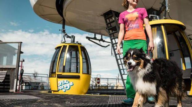 I cani possono andare anche sugli impianti di risalita