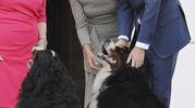 Harry e Meghan con la moglie del presidente irlandese Michael Higgins e due cagnoni (Ansa)